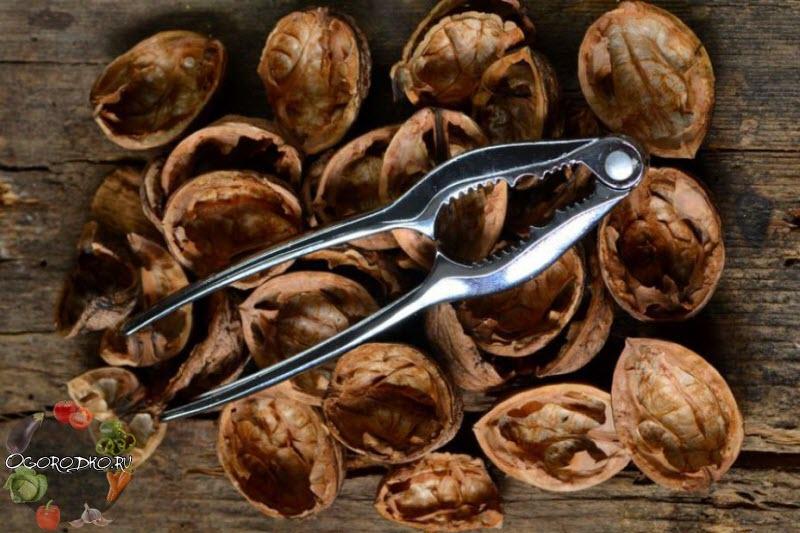 Шкаралупа волоського горіха – застосування в народній медицині, в городі, в саду + фото